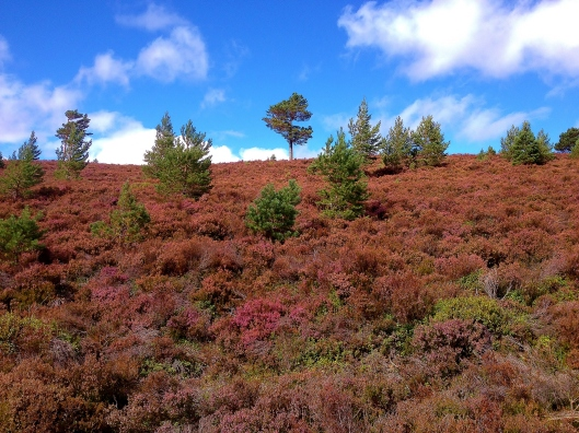 Tree in the heather